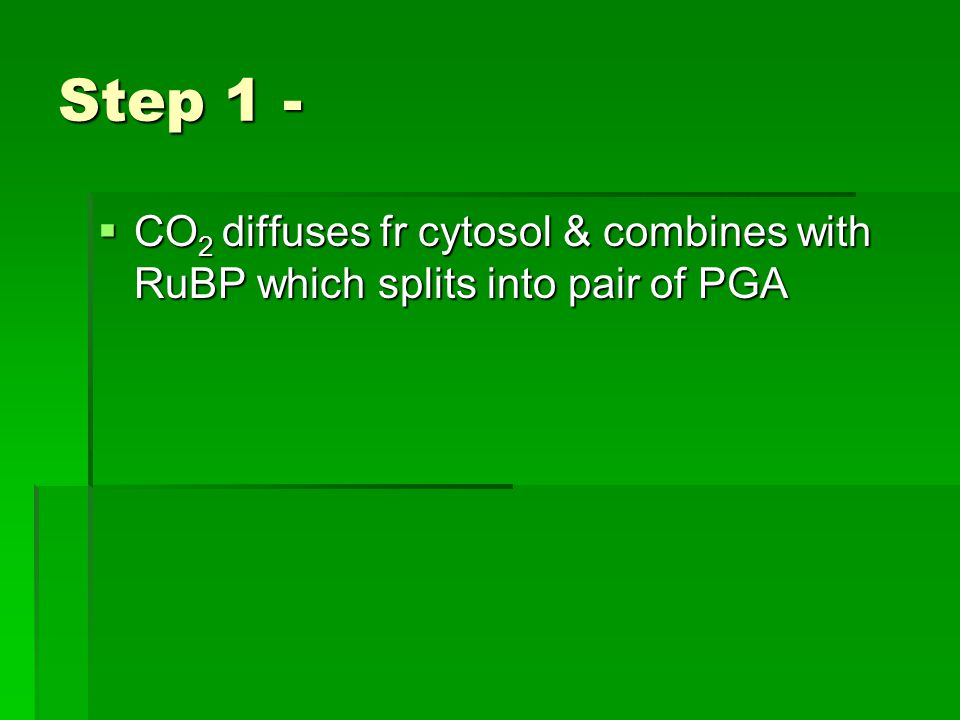 Step 1 -  CO 2 diffuses fr cytosol & combines with RuBP which splits into pair of PGA