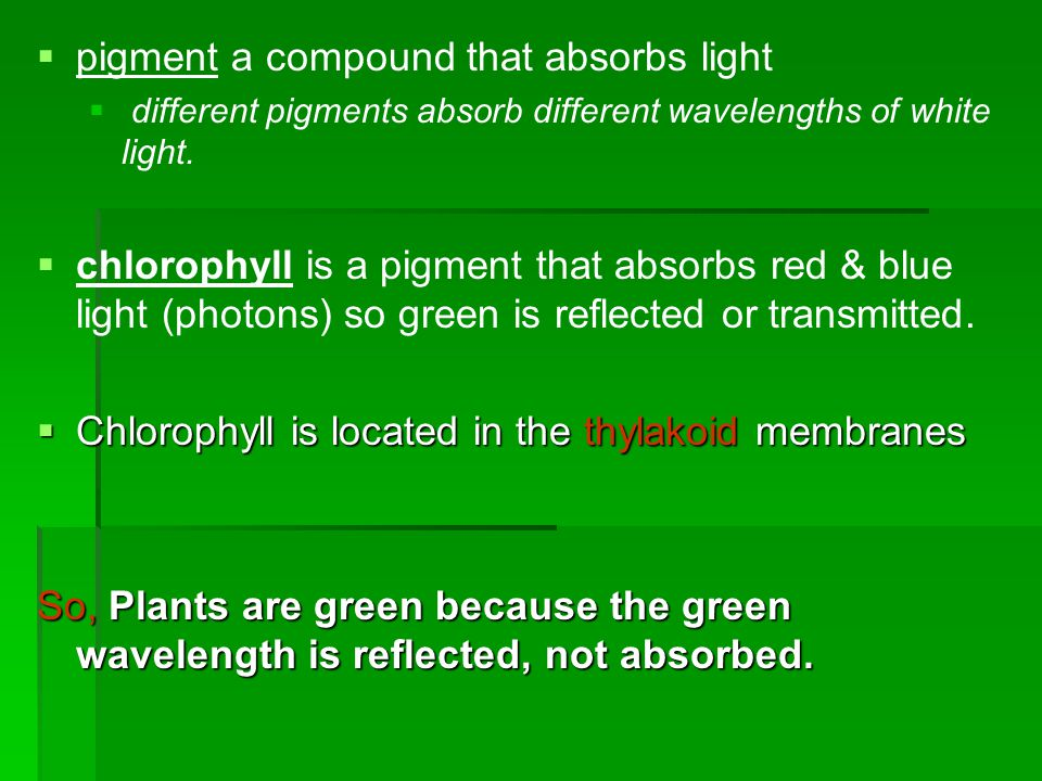 Alternates:  C 3 plants – use Calvin cycle exclusively  Form 3-carbon compounds  C 4 pathway – evolved in hot, dry climate  Form 4-carbon compounds  Partially close stomata  E.g.