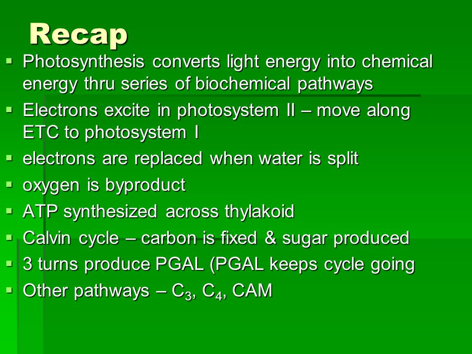 Recap  Photosynthesis converts light energy into chemical energy thru series of biochemical pathways  Electrons excite in photosystem II – move along ETC to photosystem I  electrons are replaced when water is split  oxygen is byproduct  ATP synthesized across thylakoid  Calvin cycle – carbon is fixed & sugar produced  3 turns produce PGAL (PGAL keeps cycle going  Other pathways – C 3, C 4, CAM