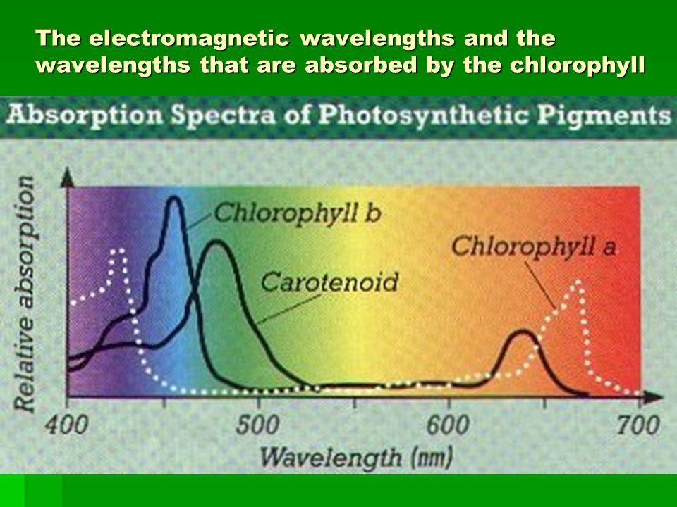 The electromagnetic wavelengths and the wavelengths that are absorbed by the chlorophyll