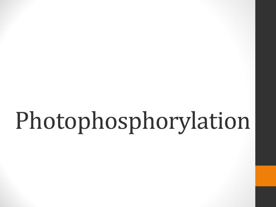 Photophosphorylation