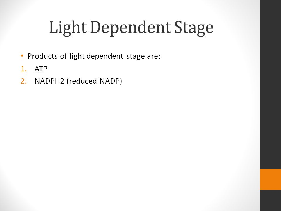 Light Dependent Stage Products of light dependent stage are: 1.ATP 2.NADPH2 (reduced NADP)