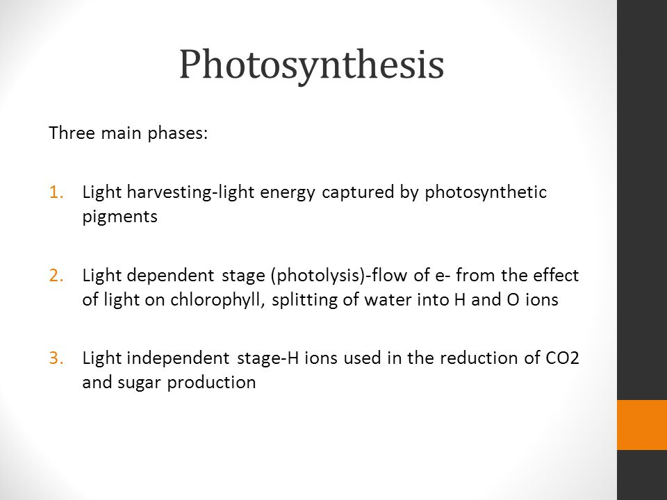 Photosynthesis Three main phases: 1.Light harvesting-light energy captured by photosynthetic pigments 2.Light dependent stage (photolysis)-flow of e- from the effect of light on chlorophyll, splitting of water into H and O ions 3.Light independent stage-H ions used in the reduction of CO2 and sugar production