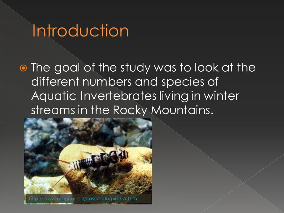  Does the Stream Morphology and Chemical Composition play a huge roll to the life of Aquatic Invertebrates living there through the winter.