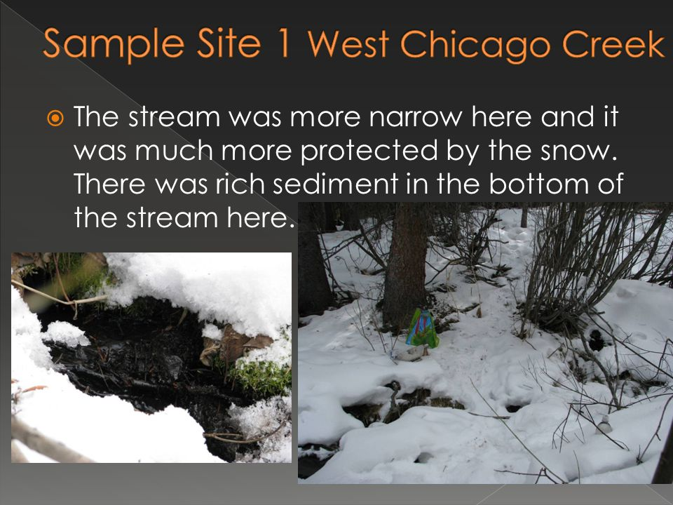  The stream was more narrow here and it was much more protected by the snow. There was rich sediment in the bottom of the stream here.