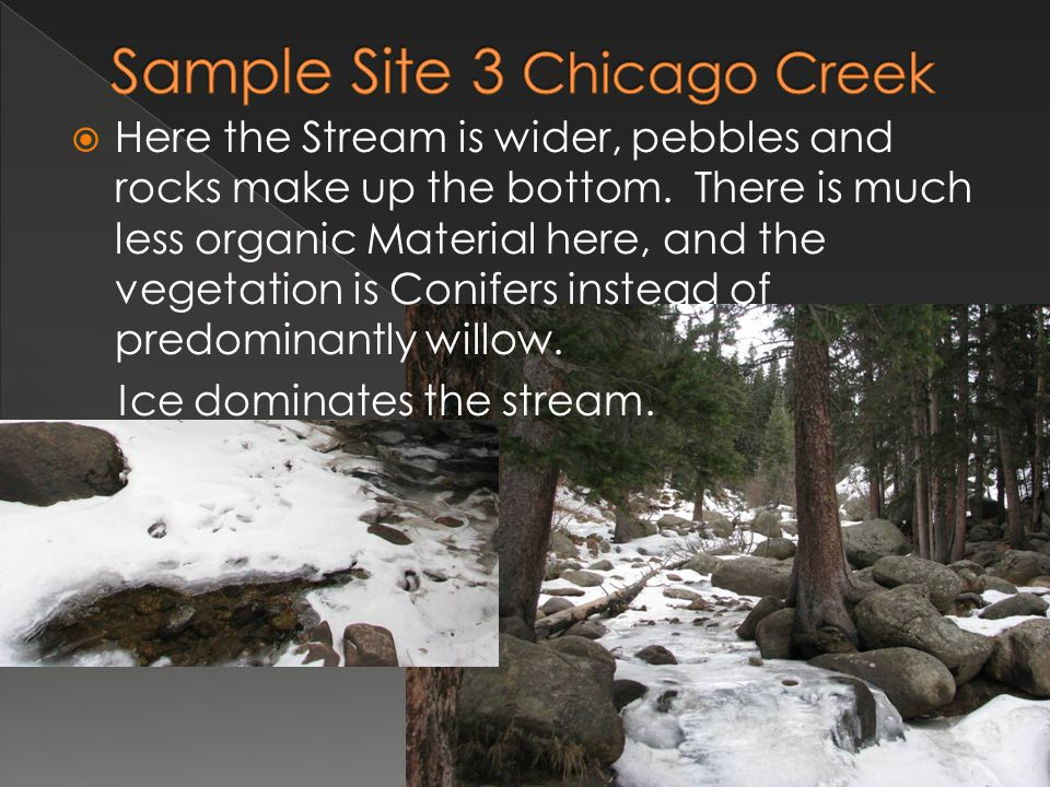  Here the Stream is wider, pebbles and rocks make up the bottom. There is much less organic Material here, and the vegetation is Conifers instead of
