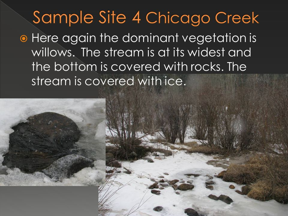  Here again the dominant vegetation is willows. The stream is at its widest and the bottom is covered with rocks. The stream is covered with ice.
