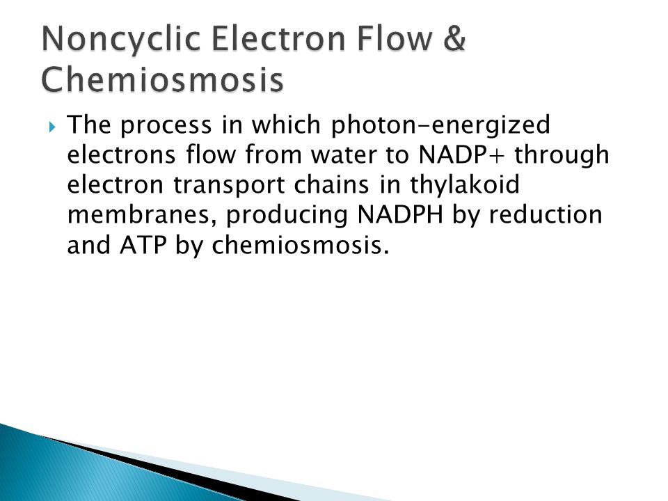  The process in which photon-energized electrons flow from water to NADP+ through electron transport chains in thylakoid membranes, producing NADPH by reduction and ATP by chemiosmosis.