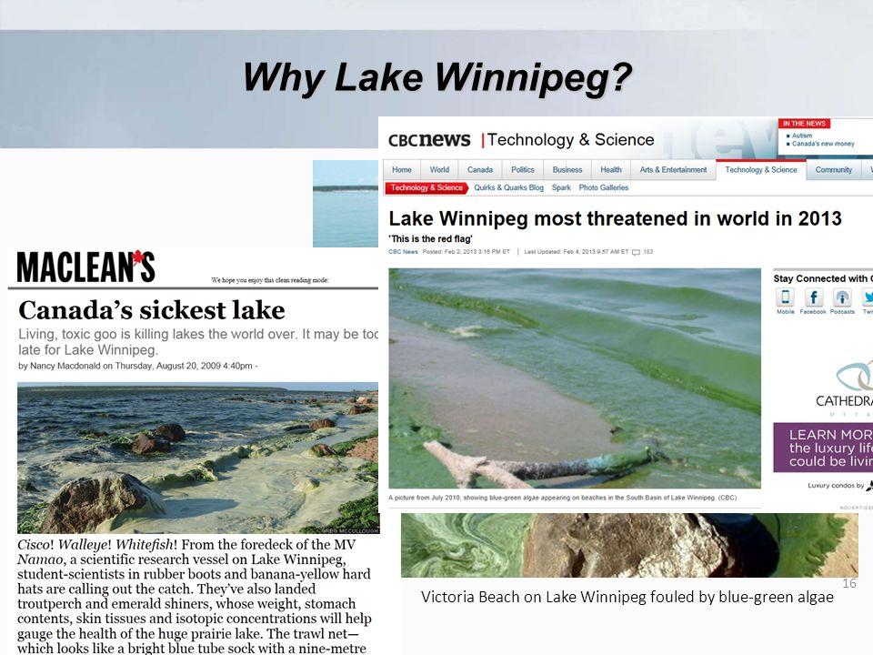Victoria Beach on Lake Winnipeg fouled by blue-green algae 16 Why Lake Winnipeg