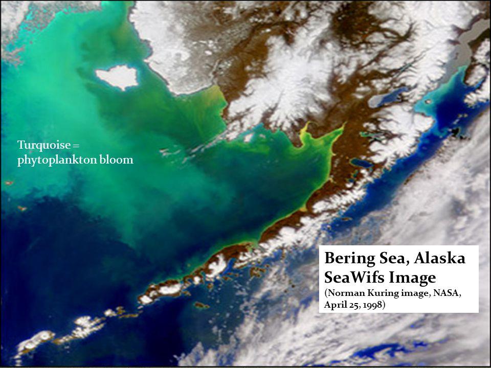 Bering Sea, Alaska SeaWifs Image (Norman Kuring image, NASA, April 25, 1998) Turquoise = phytoplankton bloom
