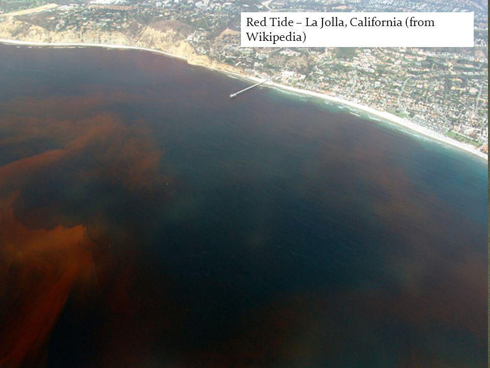 Red Tide – La Jolla, California (from Wikipedia)