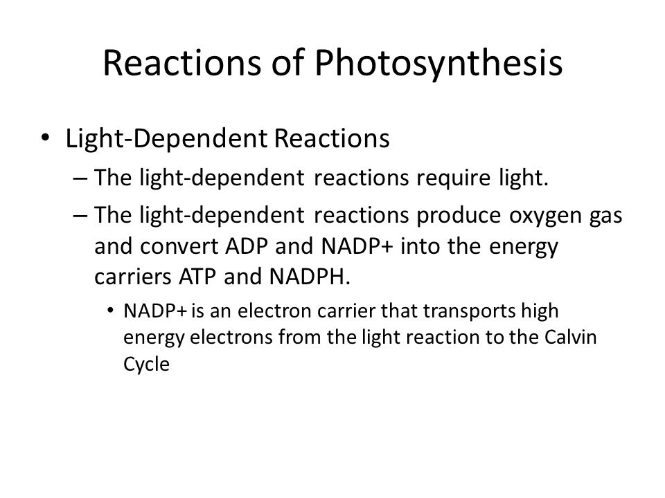 Reactions of Photosynthesis Light-Dependent Reactions – The light-dependent reactions require light. – The light-dependent reactions produce oxygen ga