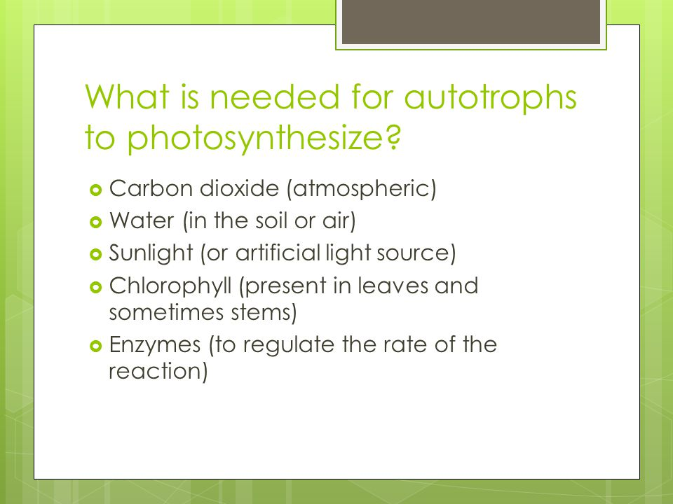 What is needed for autotrophs to photosynthesize.