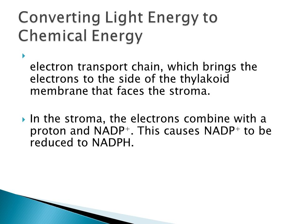  These electrons are then donated to another electron transport chain, which brings the electrons to the side of the thylakoid membrane that faces th