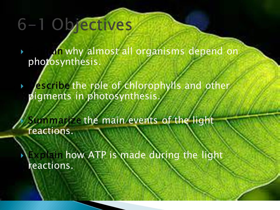  Explain why almost all organisms depend on photosynthesis.  Describe the role of chlorophylls and other pigments in photosynthesis.  Summarize the