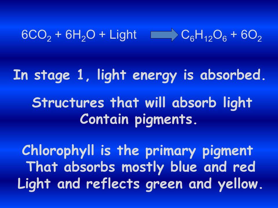 6CO 2 + 6H 2 O + Light C 6 H 12 O 6 + 6O 2