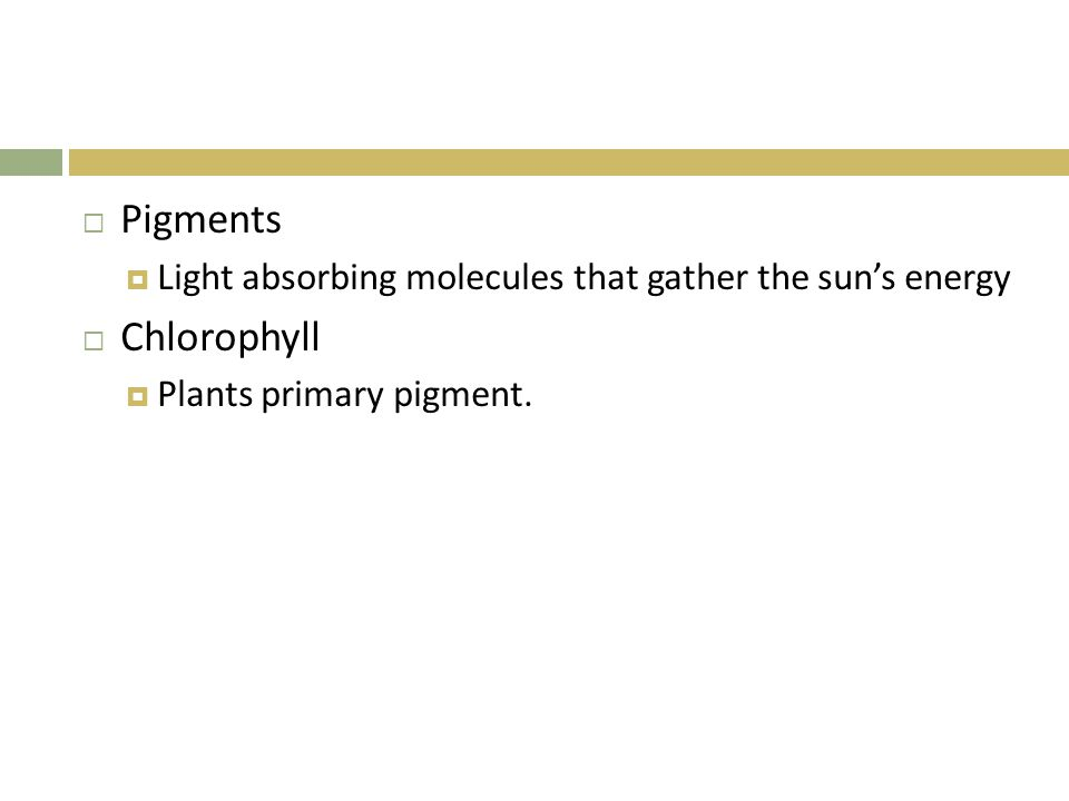  Pigments  Light absorbing molecules that gather the sun's energy  Chlorophyll  Plants primary pigment.