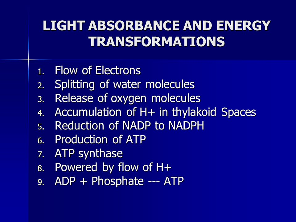LIGHT ABSORBANCE AND ENERGY TRANSFORMATIONS 1. Flow of Electrons 2. Splitting of water molecules 3. Release of oxygen molecules 4. Accumulation of H+