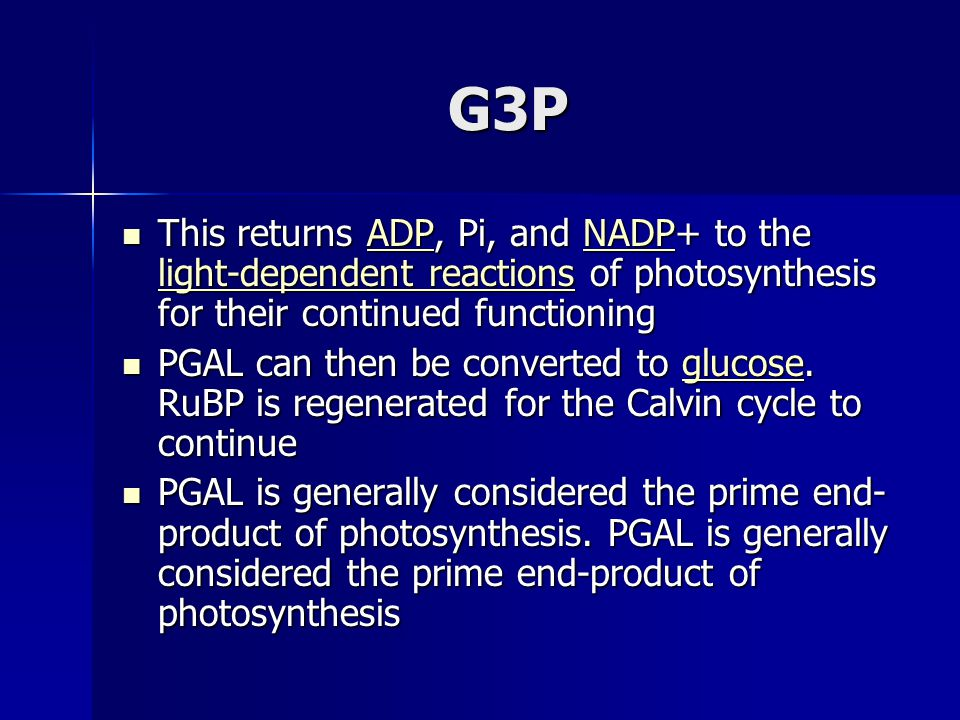 G3P This returns ADP, Pi, and NADP+ to the light-dependent reactions of photosynthesis for their continued functioning This returns ADP, Pi, and NADP+