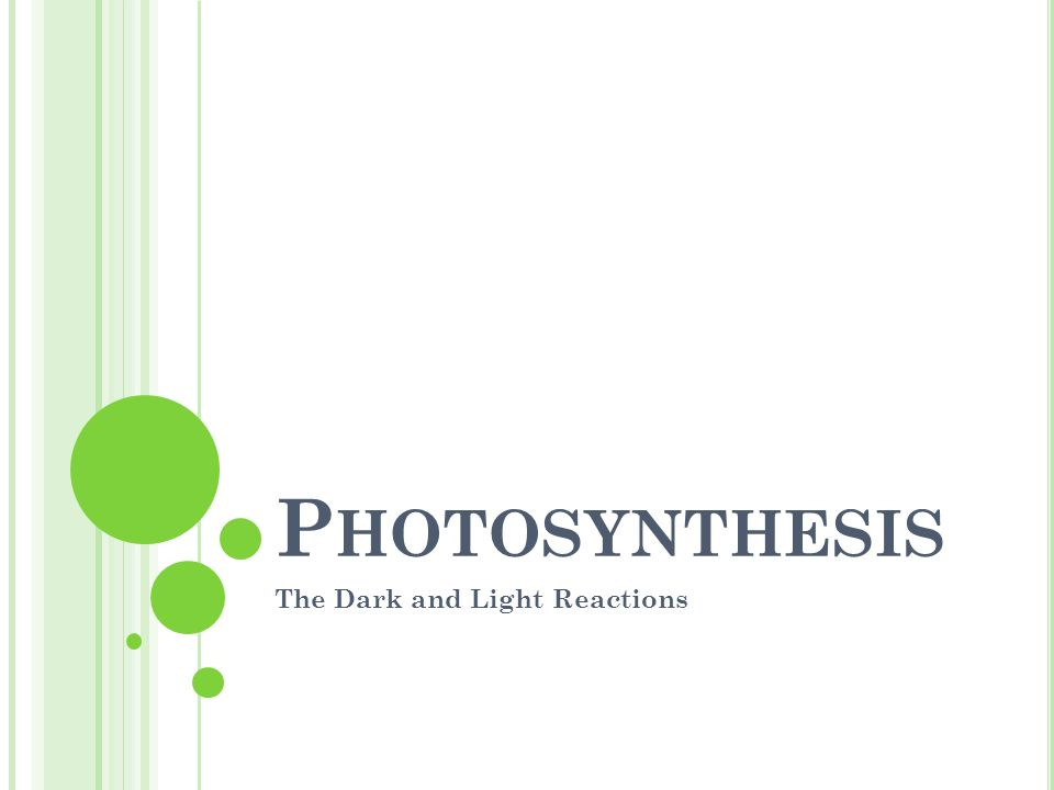 P HOTOSYNTHESIS The Dark and Light Reactions