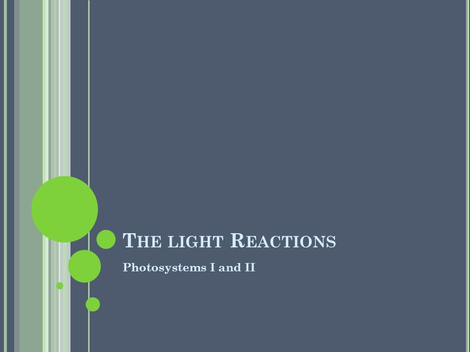 T HE LIGHT R EACTIONS Photosystems I and II