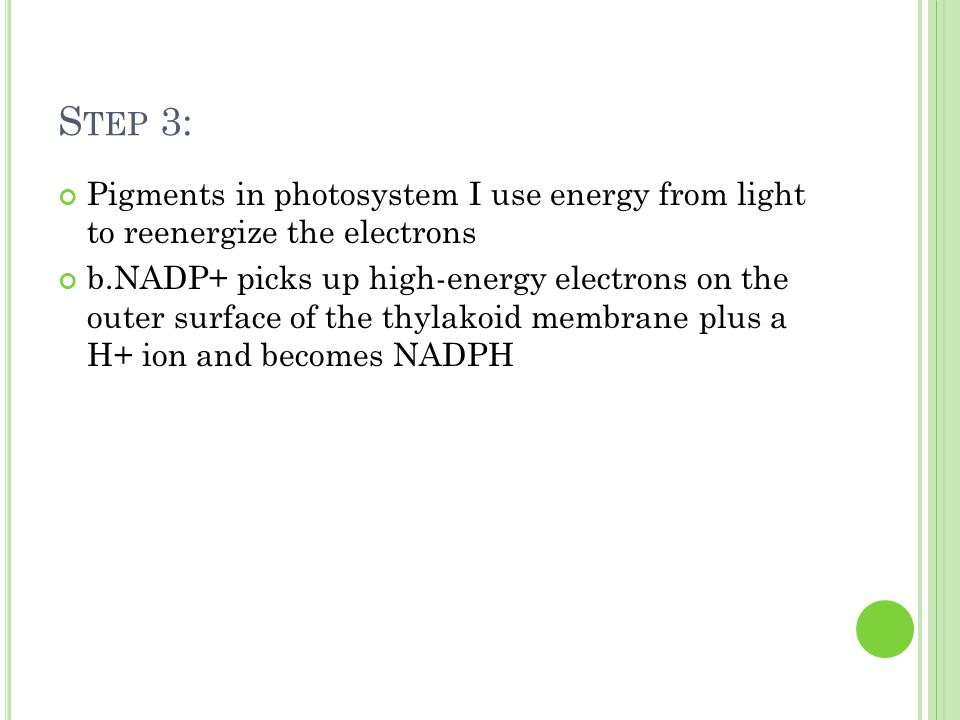 S TEP 3: Pigments in photosystem I use energy from light to reenergize the electrons b.NADP+ picks up high-energy electrons on the outer surface of the thylakoid membrane plus a H+ ion and becomes NADPH