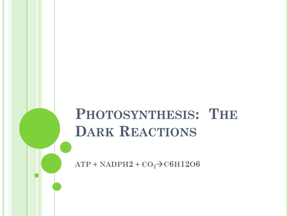 P HOTOSYNTHESIS : T HE D ARK R EACTIONS ATP + NADPH 2 + CO 2  C 6 H 12 O 6