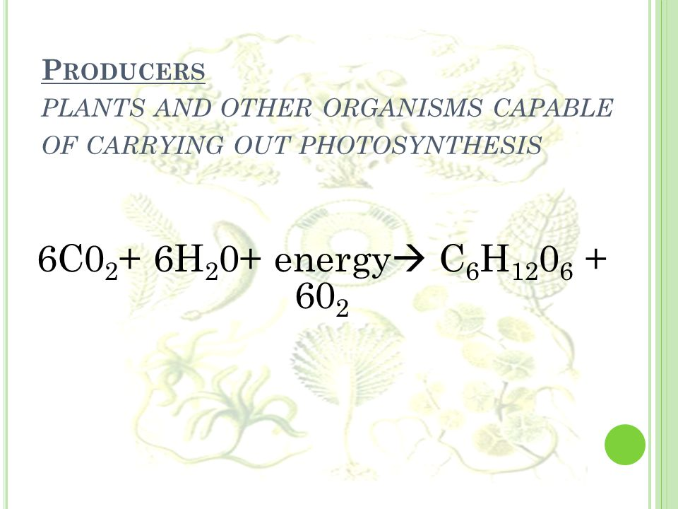 P RODUCERS PLANTS AND OTHER ORGANISMS CAPABLE OF CARRYING OUT PHOTOSYNTHESIS 6C0 2 + 6H 2 0+ energy  C 6 H 12 0 6 + 60 2