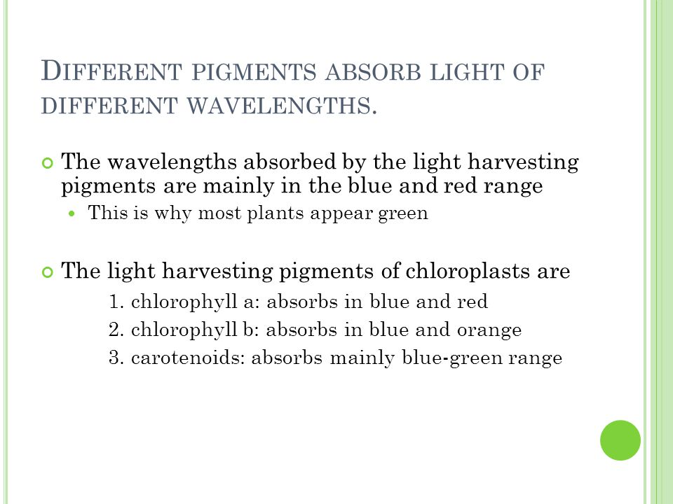 D IFFERENT PIGMENTS ABSORB LIGHT OF DIFFERENT WAVELENGTHS.