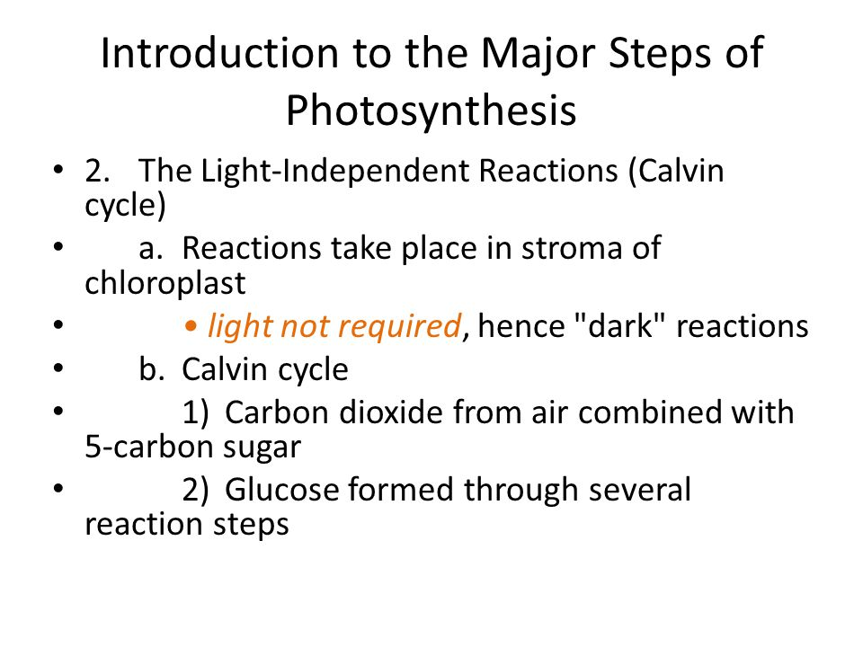 2.The Light-Independent Reactions (Calvin cycle) a.Reactions take place in stroma of chloroplast light not required, hence