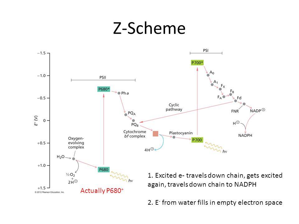Z-Scheme Actually P680 + 1.