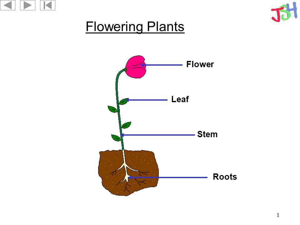 1 Flowering Plants Roots Leaf Flower Stem