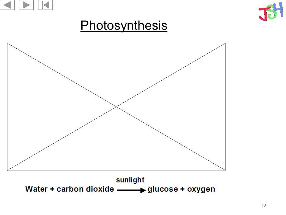 12 Photosynthesis