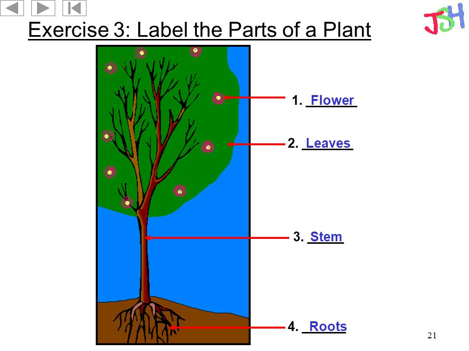 21 Exercise 3: Label the Parts of a Plant 4. ______ 2. _______ 1. _______ 3. _____ Roots Leaves Flower Stem