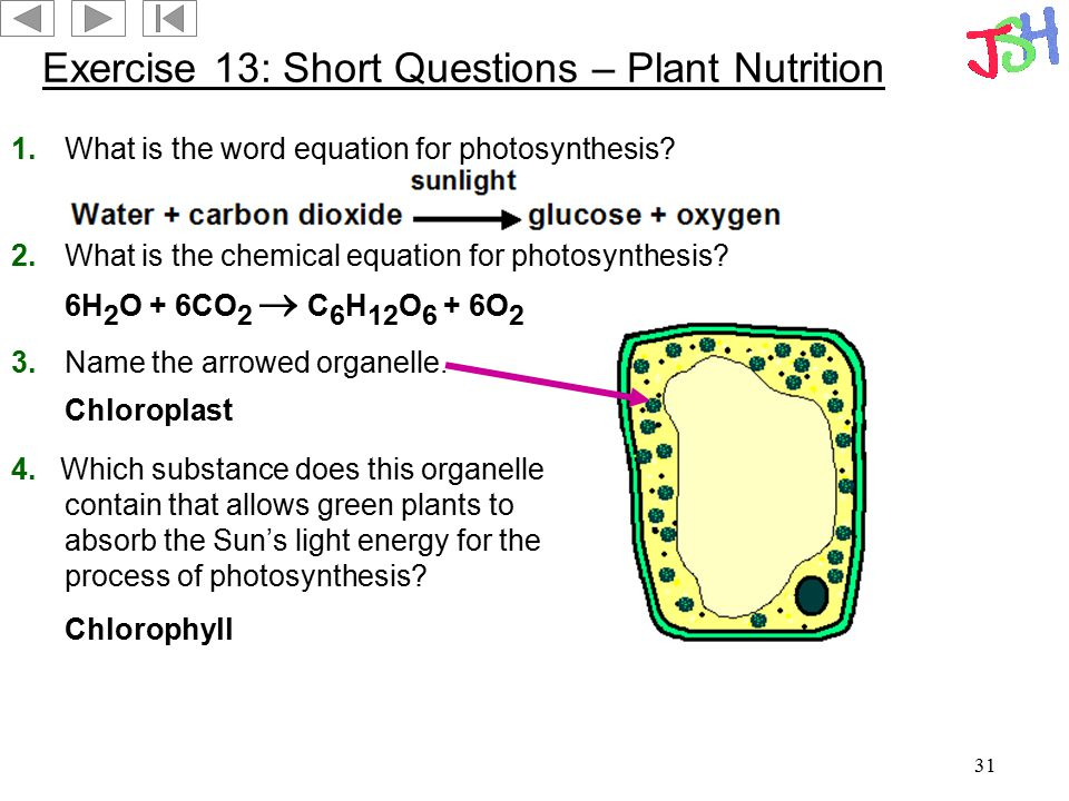 31 Exercise 13: Short Questions – Plant Nutrition 1.What is the word equation for photosynthesis? 2.What is the chemical equation for photosynthesis?
