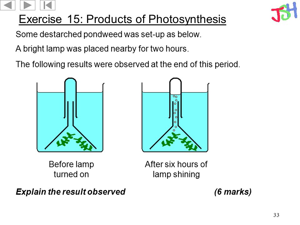 33 Exercise 15: Products of Photosynthesis Some destarched pondweed was set-up as below. A bright lamp was placed nearby for two hours. Before lamp tu