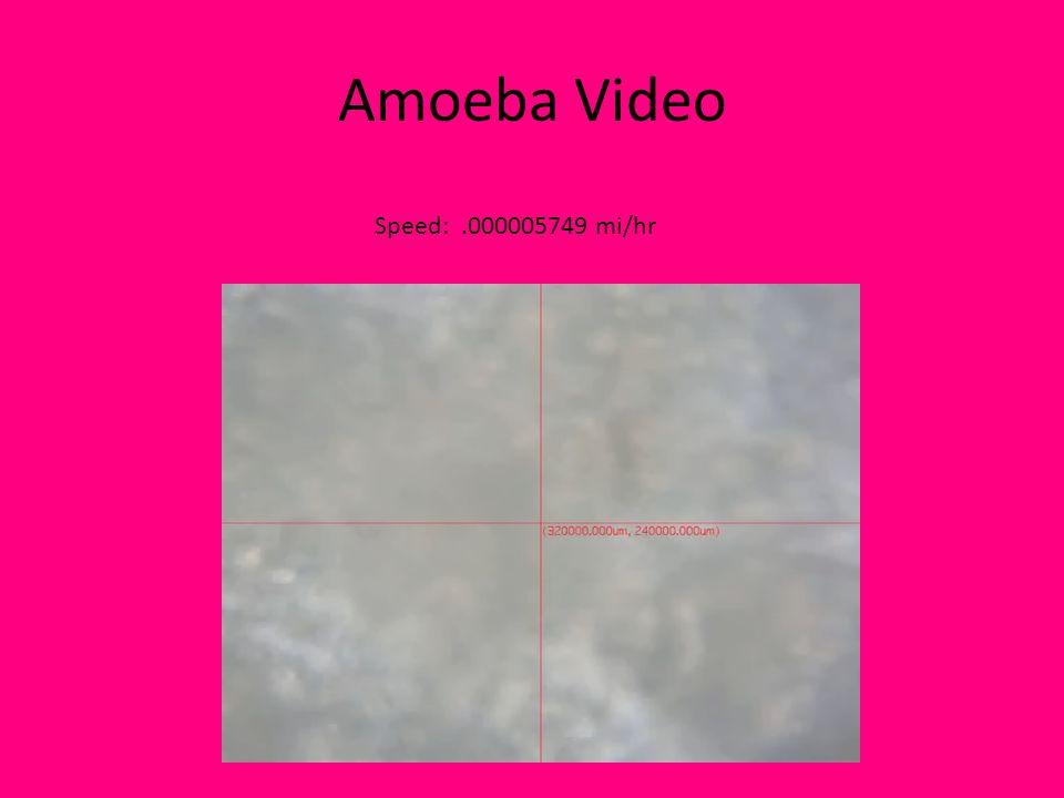 Amoeba Video Speed:.000005749 mi/hr