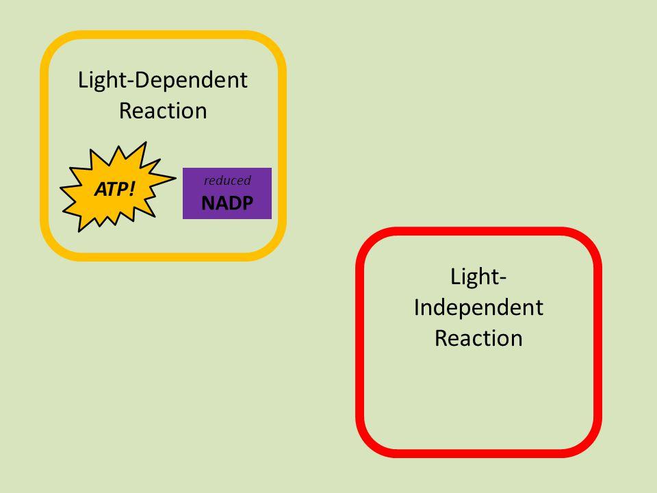 chlorophyll e-e- e-e- e l e c t r o n e n e r g y l e v e l energy ADPPiPi ATP.