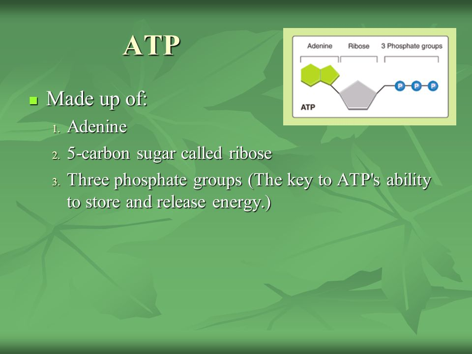 ATP ATP Made up of: Made up of: 1. Adenine 2. 5-carbon sugar called ribose 3. Three phosphate groups (The key to ATP's ability to store and release en