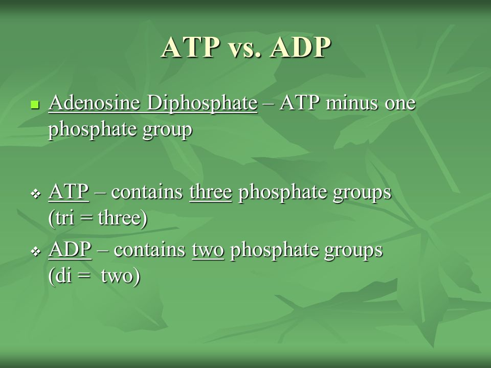 ATP vs. ADP Adenosine Diphosphate – ATP minus one phosphate group Adenosine Diphosphate – ATP minus one phosphate group  ATP – contains three phospha