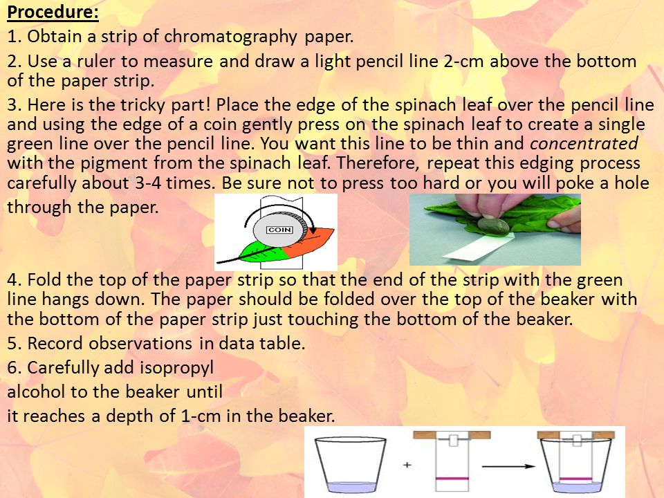 Procedure: 1. Obtain a strip of chromatography paper. 2. Use a ruler to measure and draw a light pencil line 2-cm above the bottom of the paper strip.