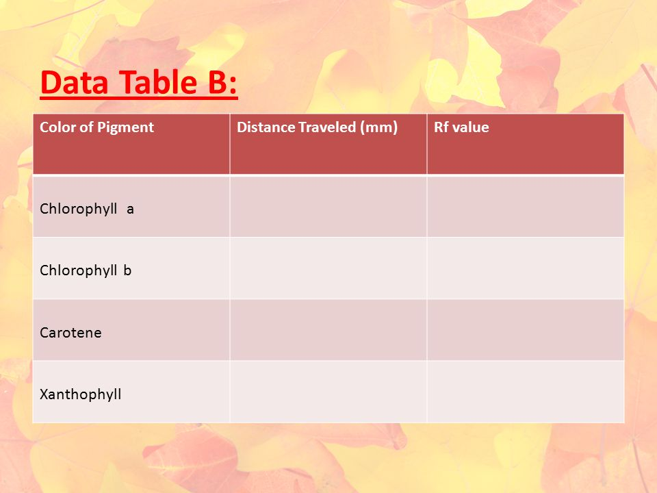 Data Table B: Color of PigmentDistance Traveled (mm)Rf value Chlorophyll a Chlorophyll b Carotene Xanthophyll
