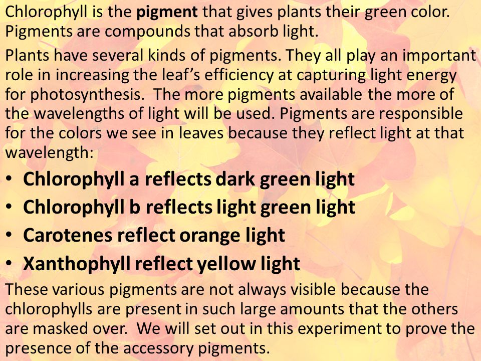 Chlorophyll is the pigment that gives plants their green color. Pigments are compounds that absorb light. Plants have several kinds of pigments. They
