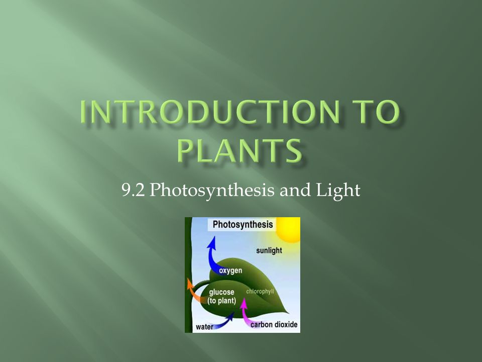 9.2 Photosynthesis and Light