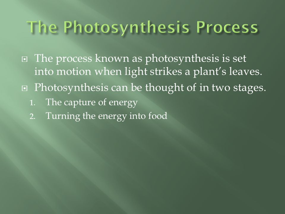  Photosynthesis begins when light strikes the chlorophyll in a plant's chloroplast.