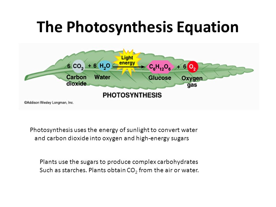 The Photosynthesis Equation Photosynthesis uses the energy of sunlight to convert water and carbon dioxide into oxygen and high-energy sugars Plants use the sugars to produce complex carbohydrates Such as starches.
