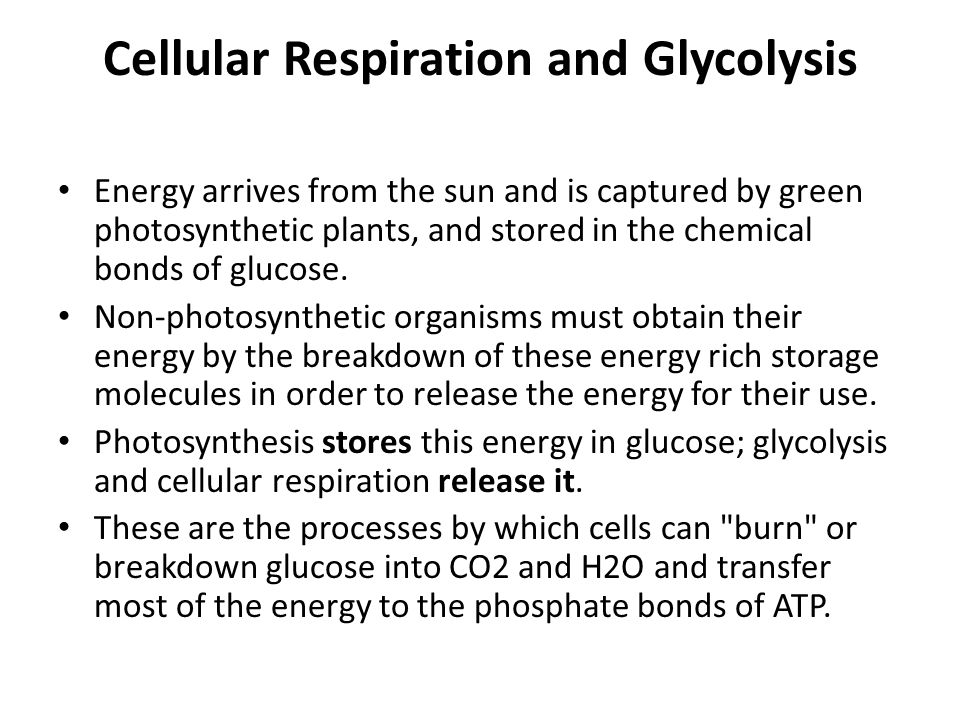 Cellular Respiration and Glycolysis Energy arrives from the sun and is captured by green photosynthetic plants, and stored in the chemical bonds of glucose.