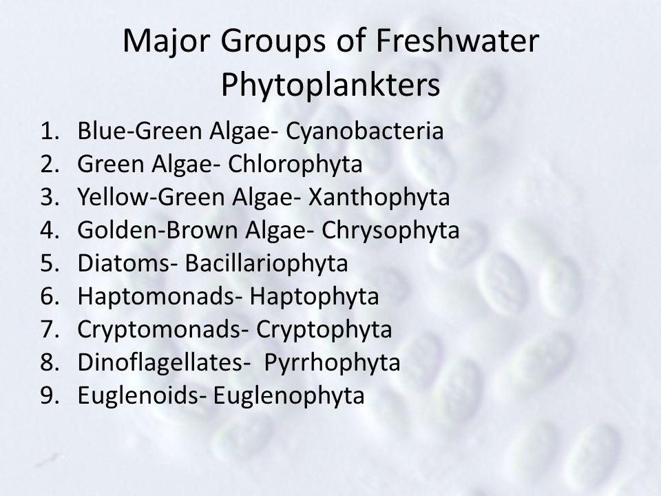Major Groups of Freshwater Phytoplankters 1.Blue-Green Algae- Cyanobacteria 2.Green Algae- Chlorophyta 3.Yellow-Green Algae- Xanthophyta 4.Golden-Brown Algae- Chrysophyta 5.Diatoms- Bacillariophyta 6.Haptomonads- Haptophyta 7.Cryptomonads- Cryptophyta 8.Dinoflagellates- Pyrrhophyta 9.Euglenoids- Euglenophyta