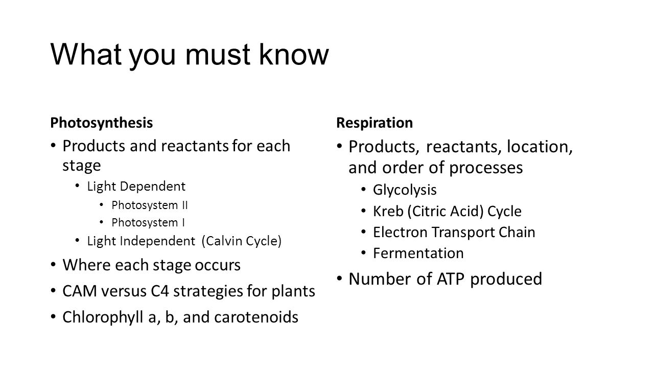 What you must know Photosynthesis Products and reactants for each stage Light Dependent Photosystem II Photosystem I Light Independent (Calvin Cycle)