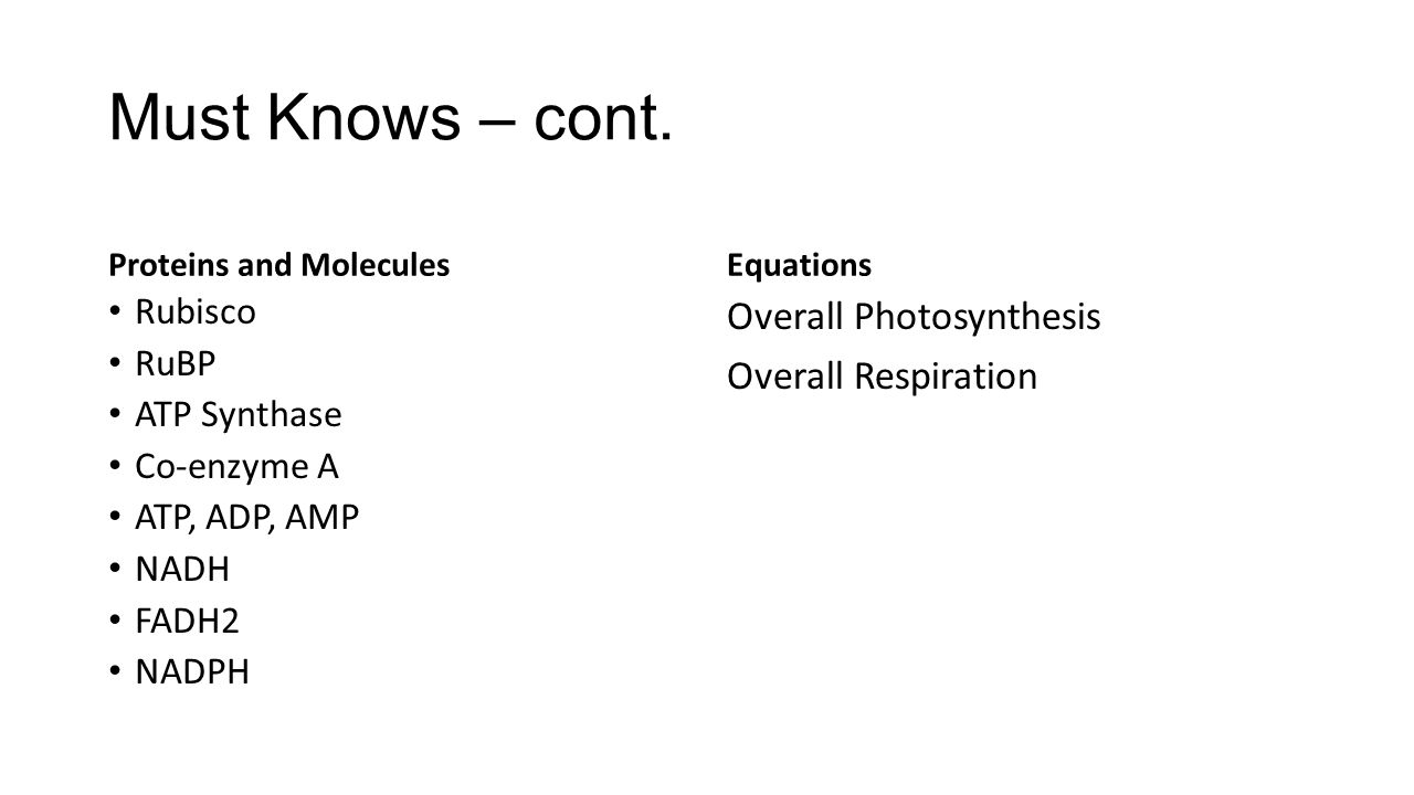 Must Knows – cont. Proteins and Molecules Rubisco RuBP ATP Synthase Co-enzyme A ATP, ADP, AMP NADH FADH2 NADPH Equations Overall Photosynthesis Overal